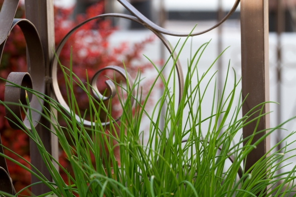 Chives www.lifeatthecottage.com