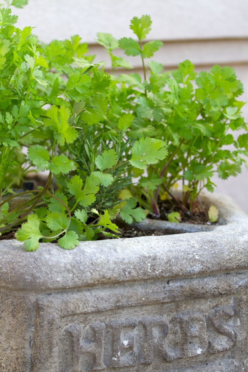 Herb Planter www.lifeatthecottage.com