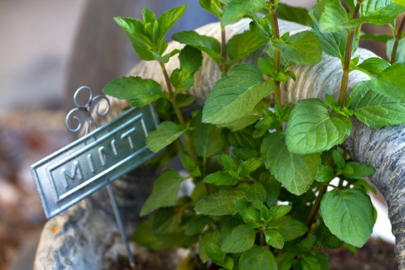 Mint www.lifeatthecottage.com